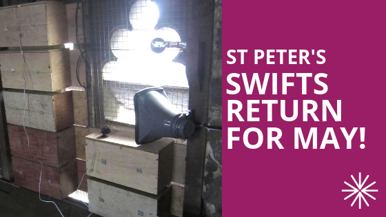 St Peter's Swifts Return for May